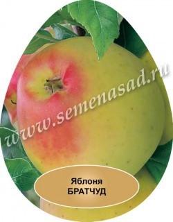 Яблоня карликовая (в коробке)   Братчуд