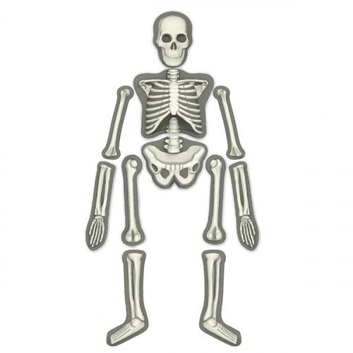 Юный врач. Скелет человека.