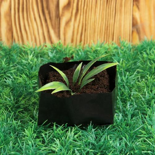 Пакет для рассады, 0,3 л, 8 × 8 × 2 см, с перфорацией, толщина 50 мкм, чёрный