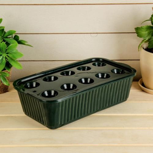 Лоток для выращивания зелёного лука, 29 × 16 × 8,5 см, тёмно-зелёный