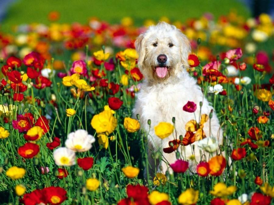 Собаки с цветами картинки