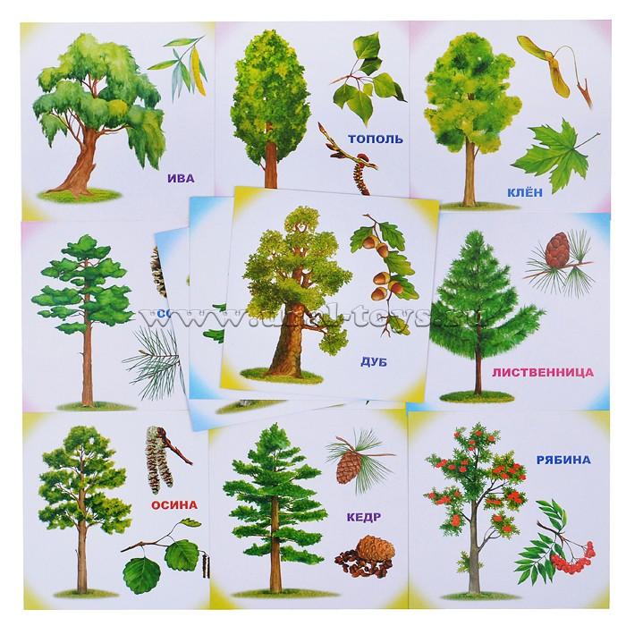 картинки деревьев для начальных классов перечитывать письма немецких