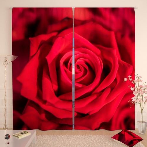 Фотошторы Открытие бордовой розы
