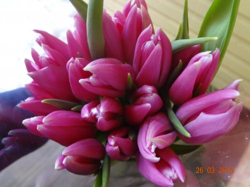 сорт Royal Ten луковицы тюльпанов