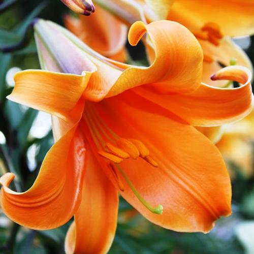 Orange Planet ЦЕНА ЗА 1ШТ 39,7536!!!!!