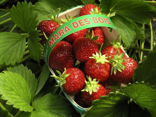 Mara des Bois A st/стандартЦЕНА ЗА 1ШТ=26,2629!!!!!