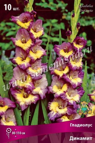 Гладиолус крупноцветковый Динамит