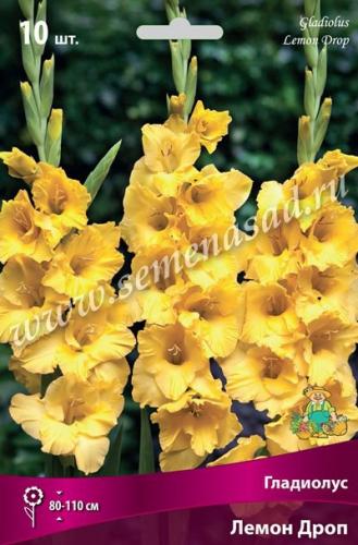 Гладиолус крупноцветковый Лемон Дроп