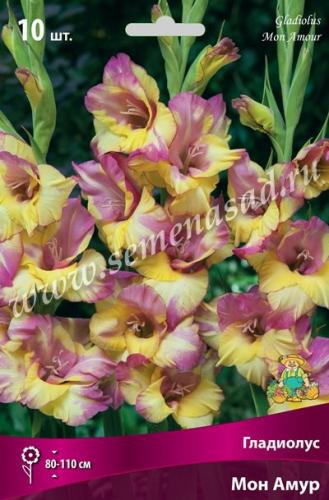 Гладиолус крупноцветковый Мон Амур
