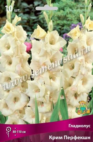 Гладиолус крупноцветковый Крим Перфекшн