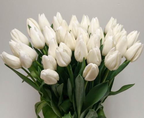 СТООП!!! закончились White Master Собирается упаковками, в 1 упаковке 20 шт.