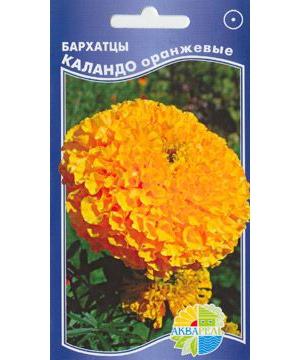 Бархатцы Каландо оранжевые
