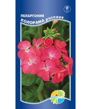 Пеларгония зональная Колорама розовая