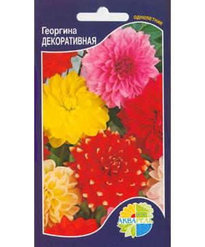 Георгина Декоративная