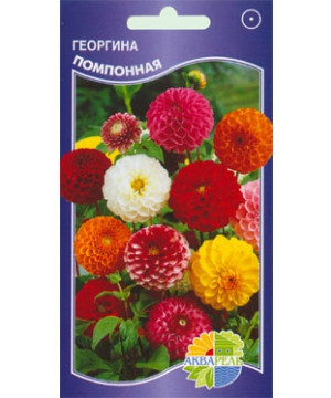 Георгина Помпонная