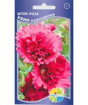 Шток-роза Квин пурпурная