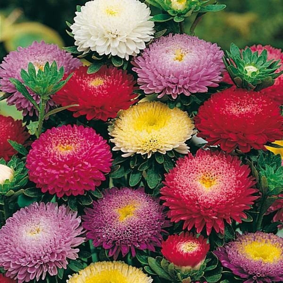 Сорта цветов в картинках