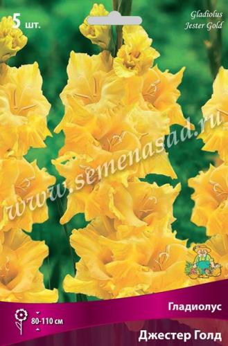 Гладиолус крупноцветковый Джестер Голд
