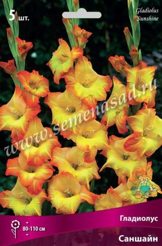 Гладиолус крупноцветковый Саншайн