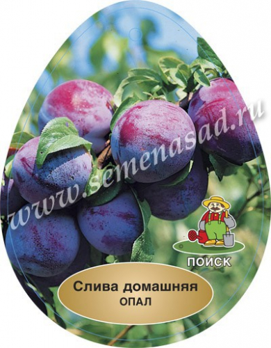Слива Опал (ранний, плод оранжево-красный с сильным восковым налетом)