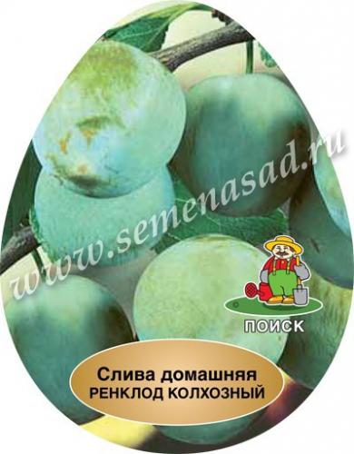 Слива Ренклод колхозный (в коробке) (среднепоздний, плод желтый)