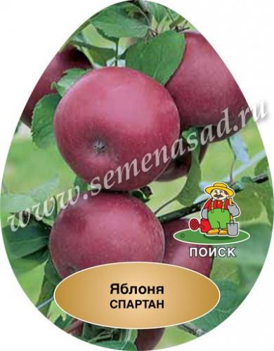 Яблоня Спартан (в коробке) (позднезимний, плод светло-желтый с бордово-красным румянцем с воск. налетом)