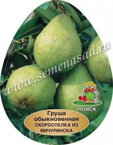 Груша Скороспелая из Мичуринска (в коробке) (раннелетний, плод желто-зеленый с розовым румянцем)