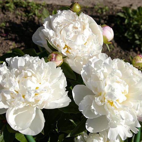 +Отправлено в бронь! Gardenia