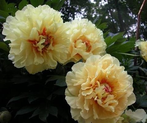 +Garden Treasure