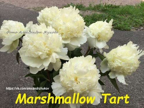 Marshmallow Tart