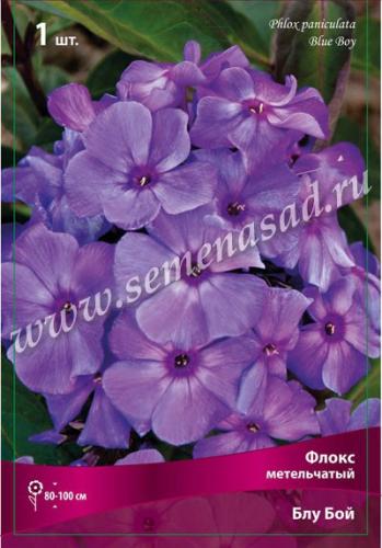 Флокс метельчатый Блу Бой (сиреневый днем,вечером голубоватый с высветлением в центре,соцветие средней плотности,куст прочный)