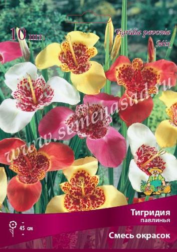 Тигридия павлинья Смесь окрасок