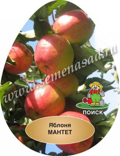 Яблоня Мантет (в коробке) (летний, плод желтоватый с ярко-красными полосами и крапинами)