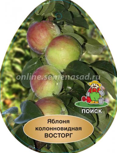Яблоня колонновидная Восторг (в коробке) (позднеосенний, плод темно-красный)