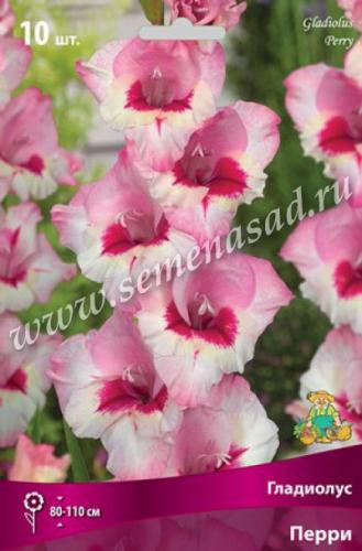 Гладиолус крупноцветковый Перри