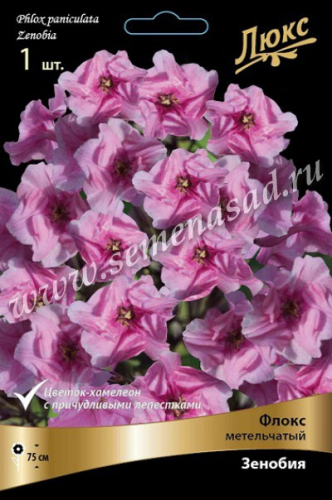 Флокс метельчатый Зенобия (ХАМЕЛЕОН, цвет изменяется от бледно-розового, почти белого, до насыщенно-розового)