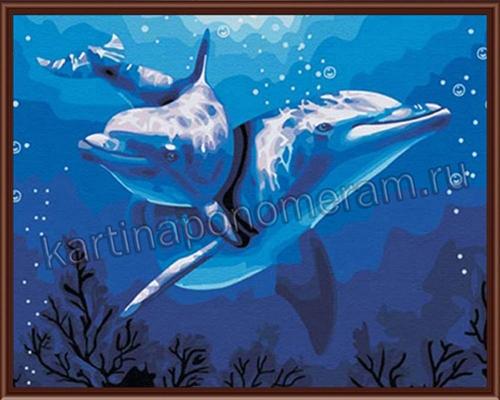 Влюблённые дельфины