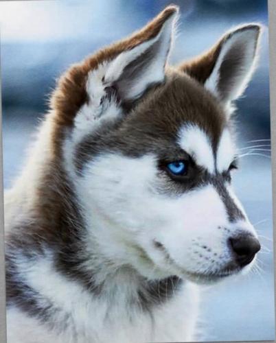 Алмазная мозайка:Снежный пес