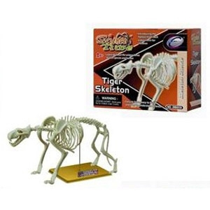 Наглядное пособие Скелет тигра 28203