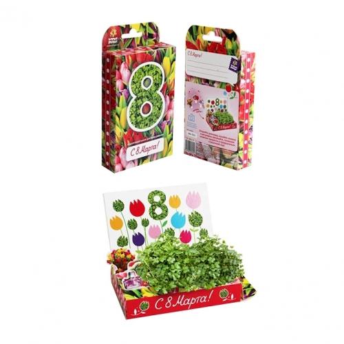 Подарочный набор для выращивания 8 Марта. Тюльпаны hps-204
