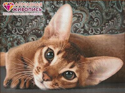 АЖ-1458 «Абиссинская кошка»