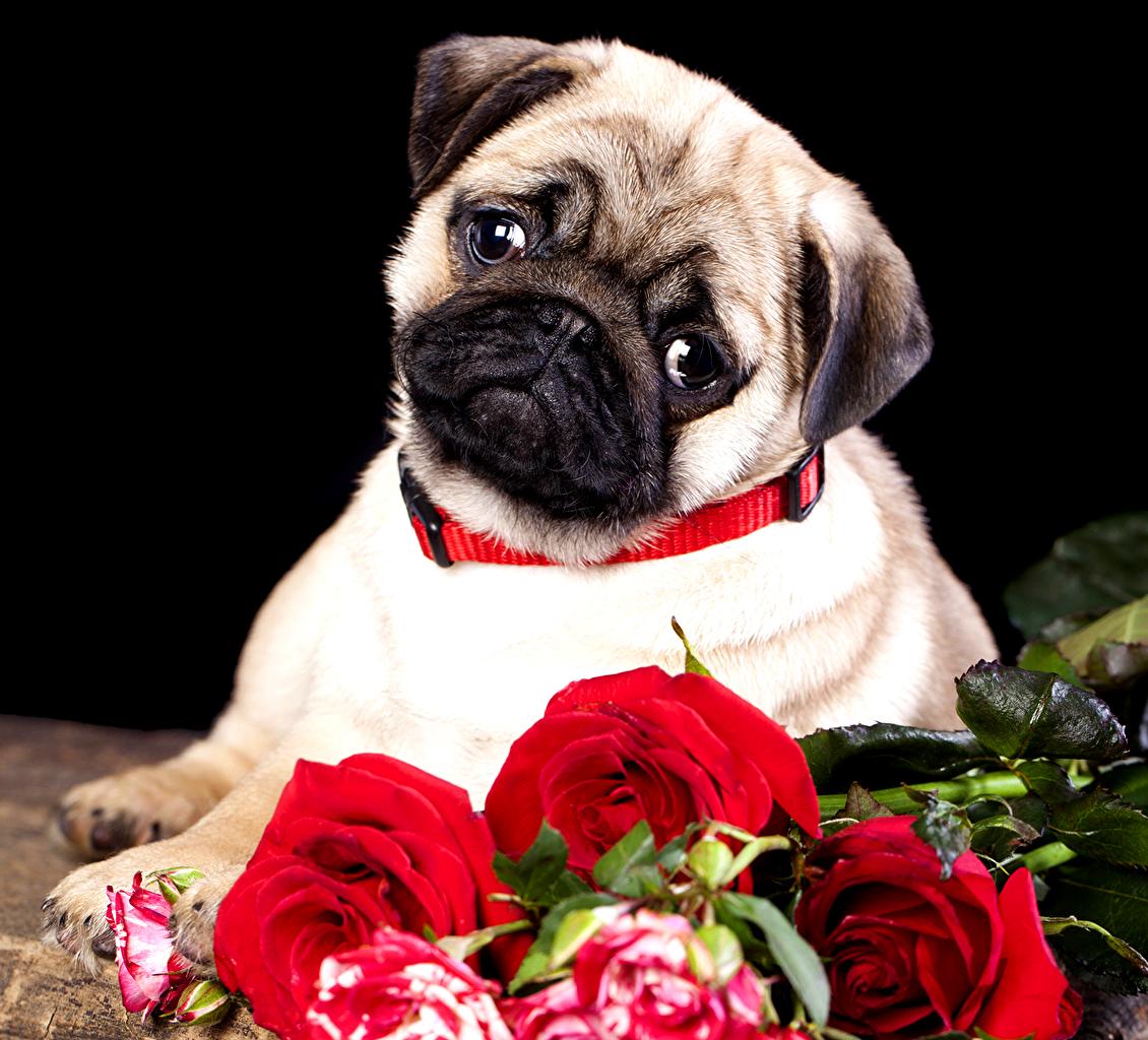 Открытки с собачками поздравительные, рамки цветы