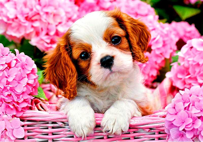Собаки и цветы картинки, спасибочки мужчине