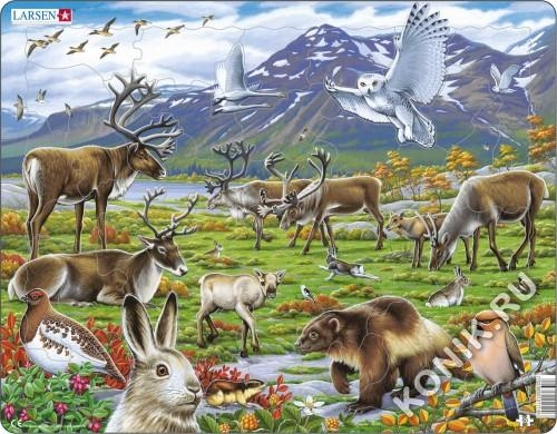 Пазл Арктика, 50 деталей