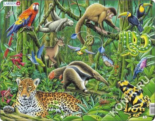 FH10 - Южно-Американские тропики