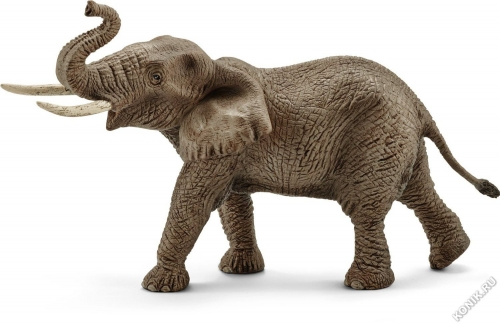 Африканский слон, самец