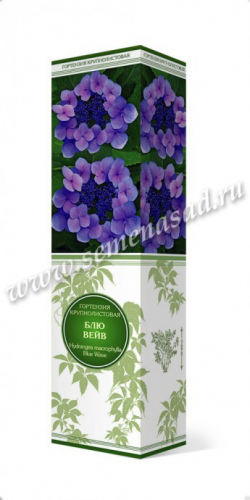 Гортензия крупнолистовая Блю Вейв (цветки голубые)