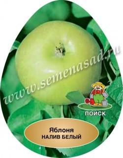 Яблоня Налив белый (в коробке) (раннелетний, нежно-белый)
