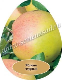 Яблоня карликовая Чудное (в коробке) (летний, зеленовато-желтый с красным румянцем)