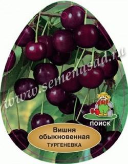 Вишня Тургеневка (в коробке) (средний, темно-бордовый,крупный)